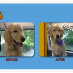 Maya Before & After Groom