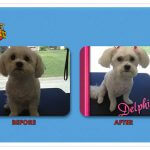 Delphie Before & After Groom