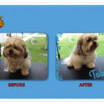 Toby Before & After Groom