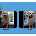 Snowball Before & After Groom