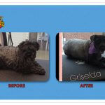 Griselda Before & After Groom