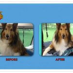 Chester Before & After Groom
