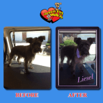 Liesel Before & After Groom
