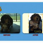 Gracy Before & After Groom