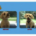 Kobe Before & After Groom