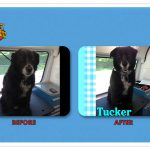 Tucker Before & After Groom