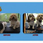 Pearl & Bart Before & After Groom