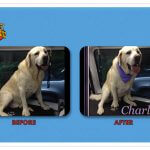 Charlie Before & After Groom
