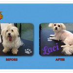 Laci Before & After Groom