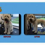 Mosley Before & After Groom