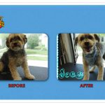 Joey Before & After Groom