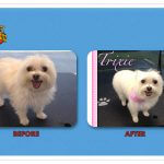 Trixie Before & After Groom
