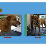Lexie Before & After Groom