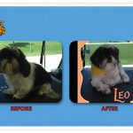 Leo Before & After Groom