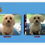 Bella Before & After Groom
