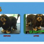 Winston Before & After Groom