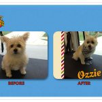 Ozzie Before & After Groom