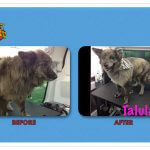 Talvla Before & After Groom