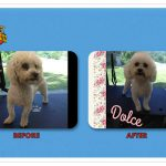 Dolce Before & After Groom