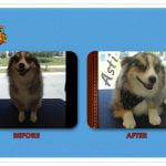 Asti Before & After Groom