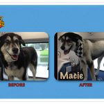 Macie Before & After Groom