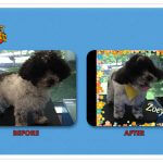Zoey Before & After Groom