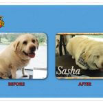 Sasha Before & After Groom