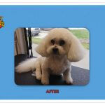 Dog After Groom