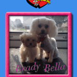 Brady & Bella After Groom