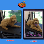 Charlotte Before & After Groom