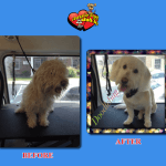 Doodlebug Before & After Groom