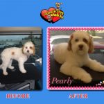 Pearly Before & After Groom