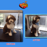 Tank Before & After Groom