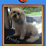 Presley After Groom