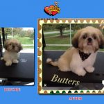 Butters Before & After Groom