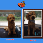 Lou Before & After Groom