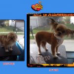 Toto Before & After Groom