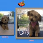 Lily Before & After Groom