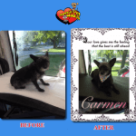 Carmen Before & After Groom