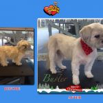 Buster Before & After Groom