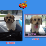 Tootsie Before & After Groom