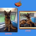 Koda Before & After Groom