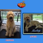 Mackey Before & After Groom