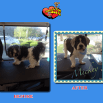 Mickey Before & After Groom