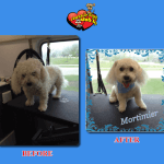 Mortimer Before & After Groom