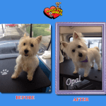 Opal Before & After Groom
