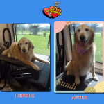 Sundi Before & After Groom