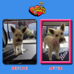 Heidi Before & After Groom
