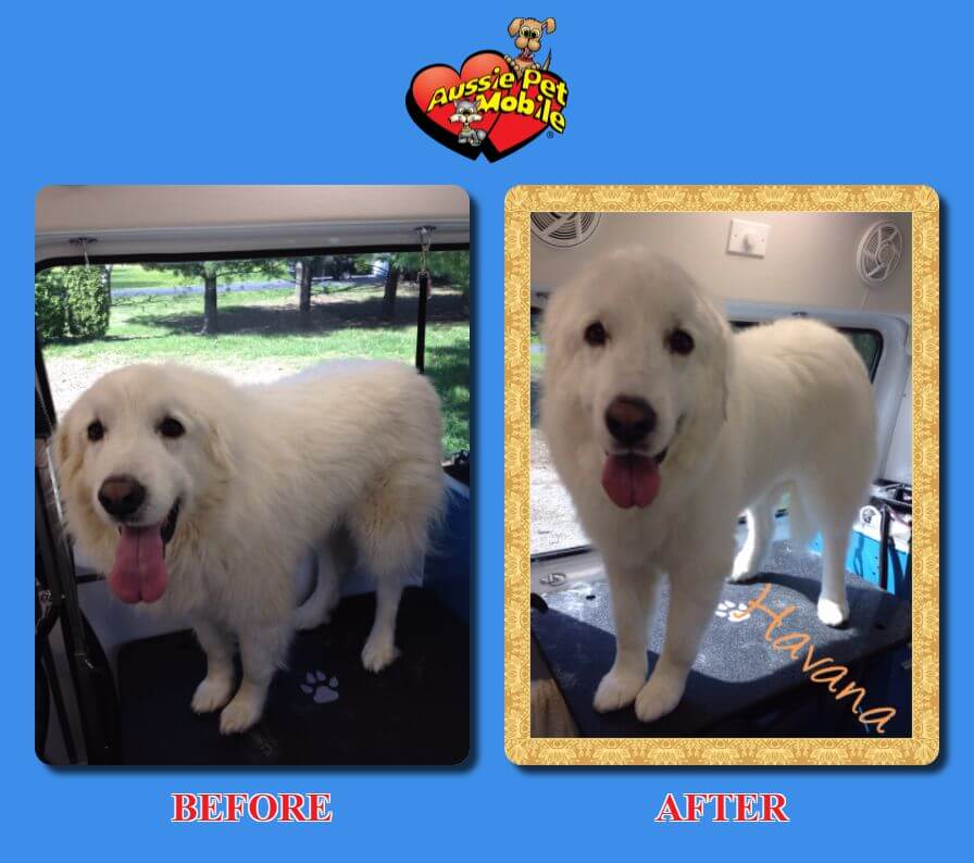 Anderson Dog Grooming